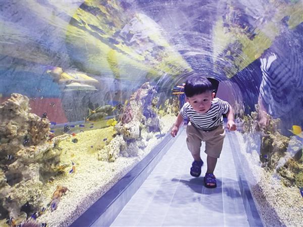 2018年8月12日下午,南宁融晟极地海洋世界在南宁市沙井大道39号举行了