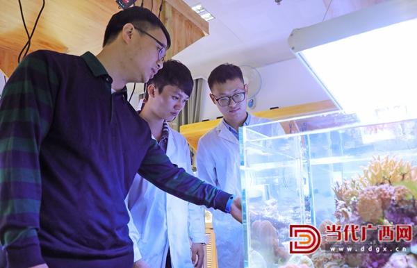 广西大学海洋学院的黄雯教授与研究人员在查看珊瑚的生长情况。记者 张友豪 摄.jpg