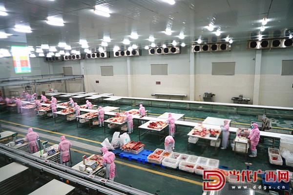工人们正在广西都安嘉豪实业有限公司的冷链仓储中心工作。记者 周剑峰 摄1_副本.jpg